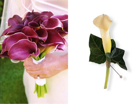 Calla Lilies for your wedding