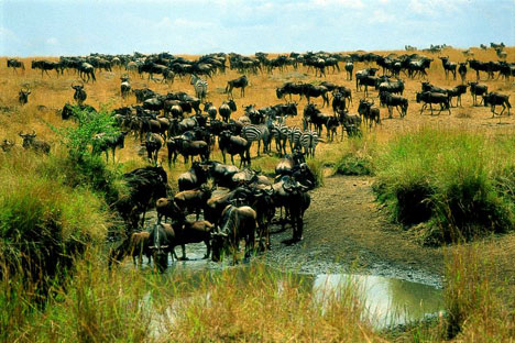Adventure honeymooning at its best: Watch the Great Migration in the Kenya Serengeti