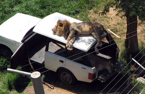 travelling hazzards in Africa!