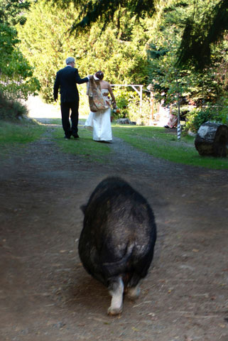 wedding at the RESTQ sanctuary